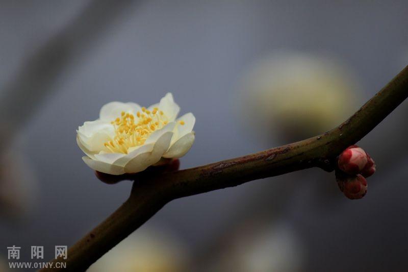 梅花之三 花卉草木