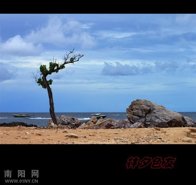 看图写意【我是海边一棵树】