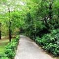 深圳红树林风光之一