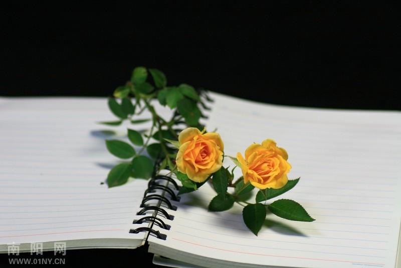 刺梅花开 花卉草木