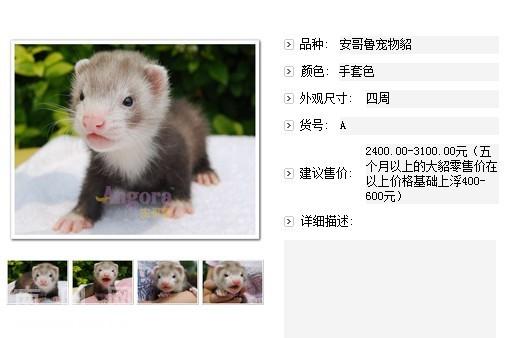 迷城粤语古天乐西瓜,渐层猫寿命,粉色哈喽kitty壁纸图