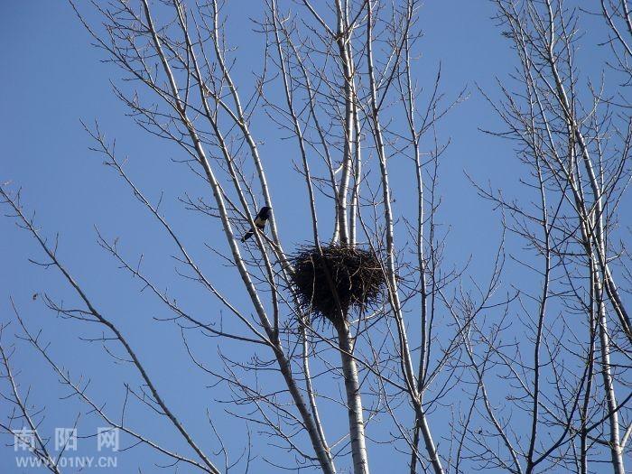 树很快乐,喜鹊也很快乐,照样子写句子