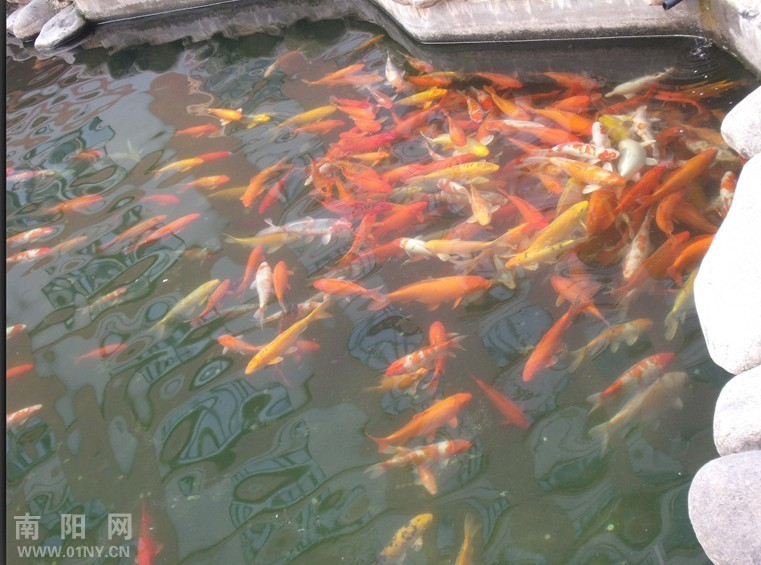 鱼儿水里游简笔画内容图片展示