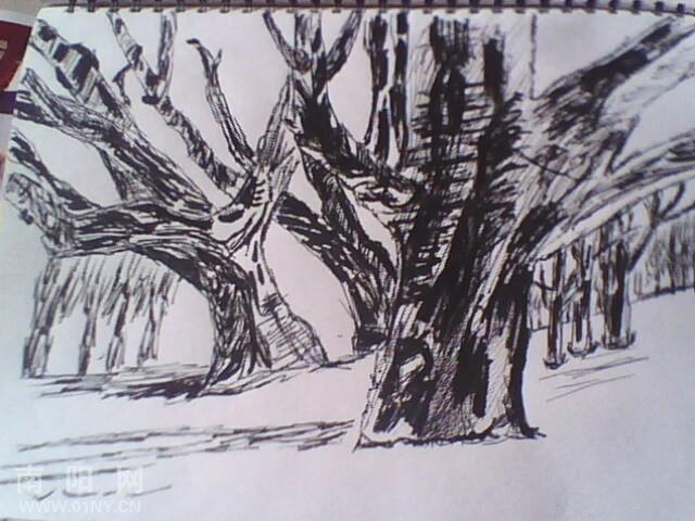 简笔画枯藤老树
