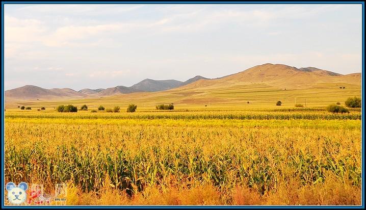 【内蒙古草原】金色的秋天(三)-行摄风光-南阳网