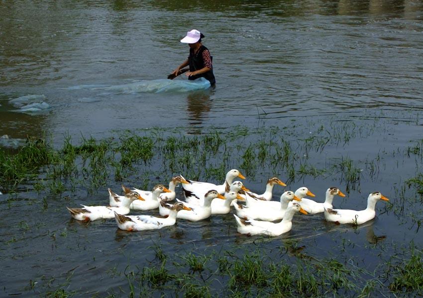 小河里有哪些动物