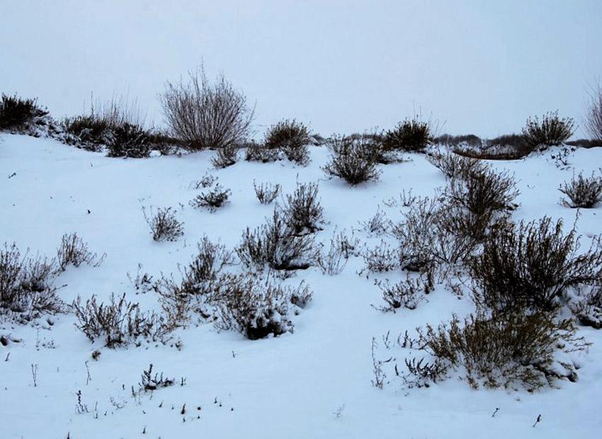 农村雪地素颜照
