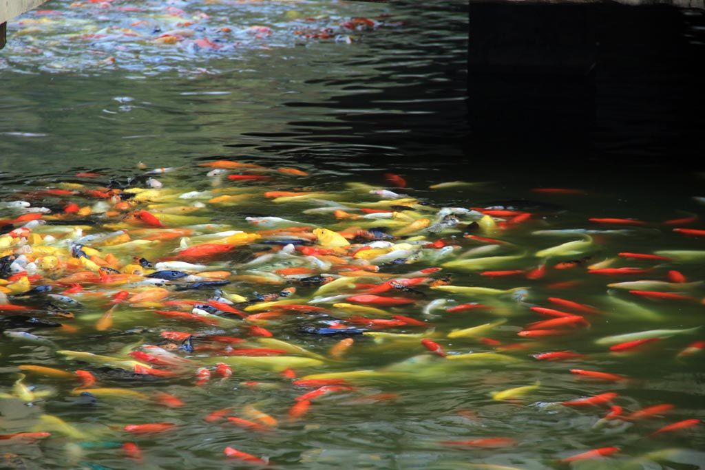 鱼儿水中游