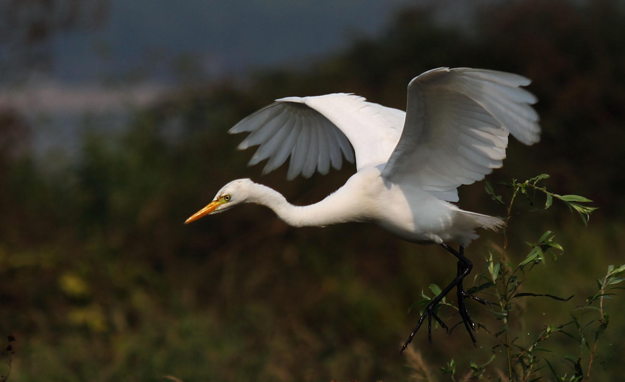 壁纸 动物 鸟 摄影 桌面 2099_1284
