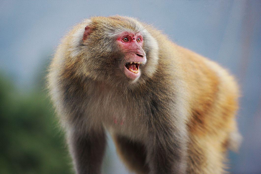 猴子的诉求,【原创】 - kkk20088 - kkk20088的博客