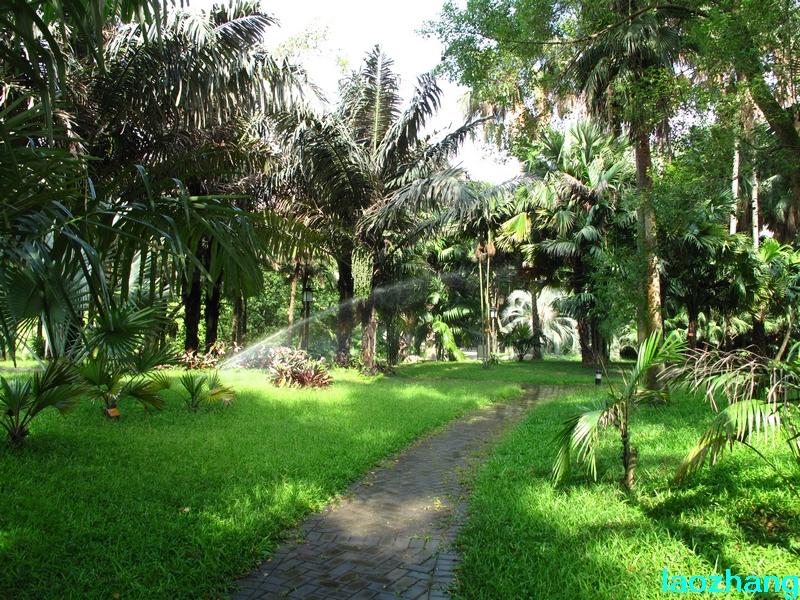 69 【光影中国】 69 新手图集 69 华南植物园---棕榈园04  邓州