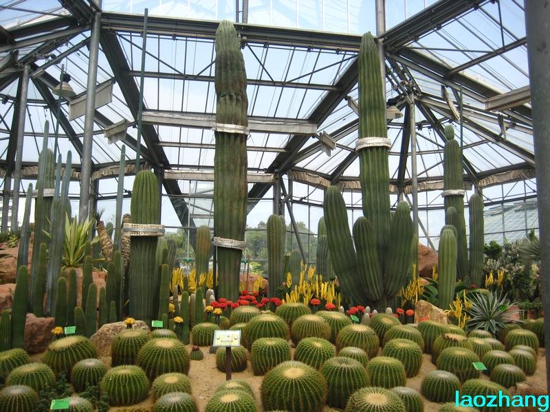 华南植物园温室_广州华南植物园温室_华南植物园沙漠温室_遂宁图片网