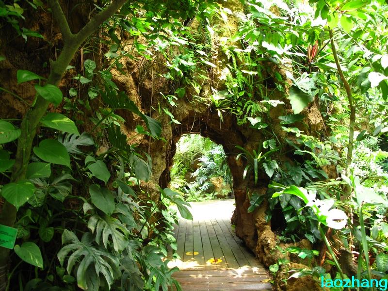 69 【光影中国】 69 新手图集 69 华南植物园----温室3  邓州