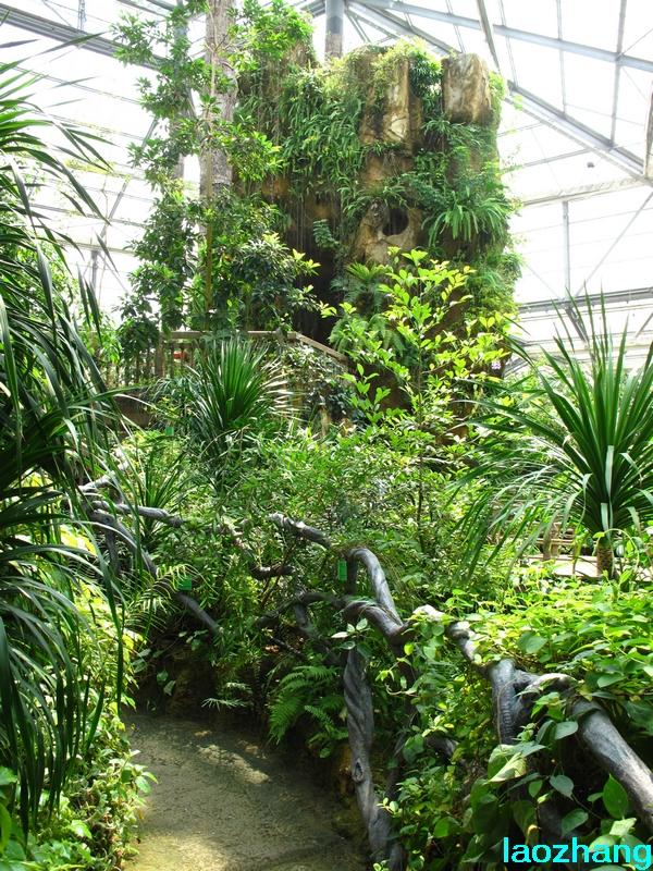 华南植物园----温室3