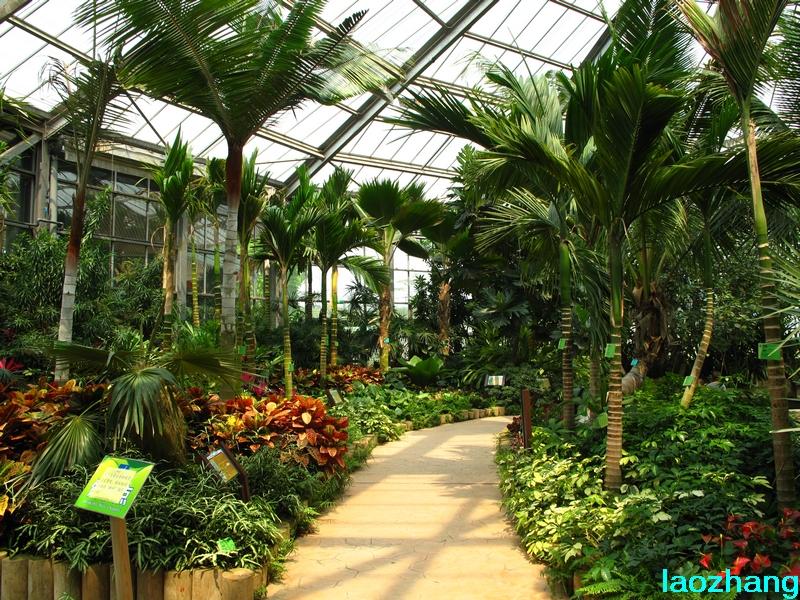 华南植物园---温室5