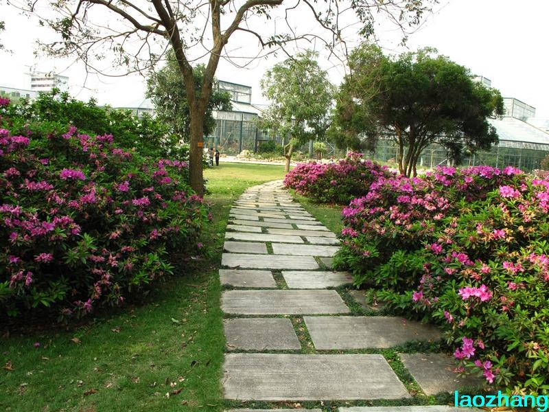69 【光影中国】 69 新手图集 69 华南植物园---杜鹃园  邓州