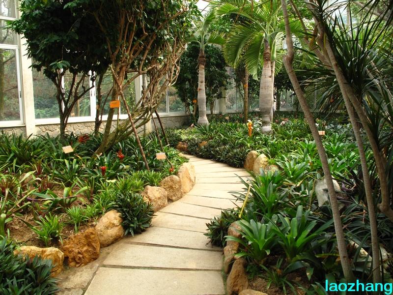 69 【光影中国】 69 新手图集 69 华南植物园---凤梨园  邓州