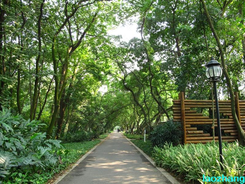 华南植物园---蕨类植物园