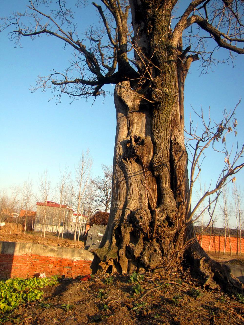 枯树桩图片素材