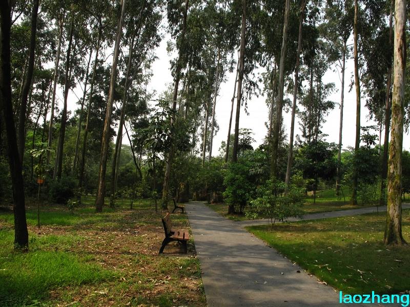 69 【光影中国】 69 新手图集 69 华南植物园---澳洲园  邓州