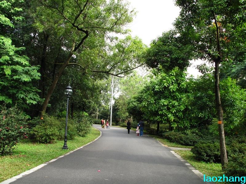 69 【光影中国】 69 新手图集 69 华南植物园---山茶园  邓州老