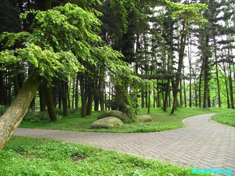 【光影中国】 69 新手图集 69 华南植物园----孑遗植物园  邓州