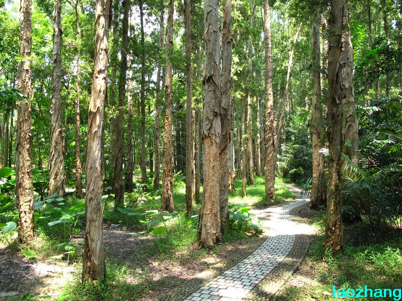 华南植物园---植物景观生态园
