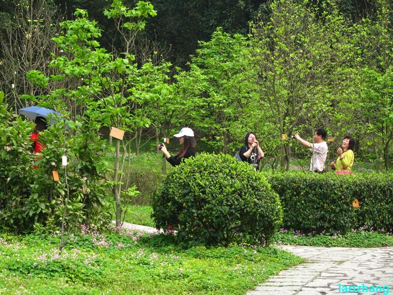 69 【光影中国】 69 新手图集 69 华南植物园---木兰园1  邓州