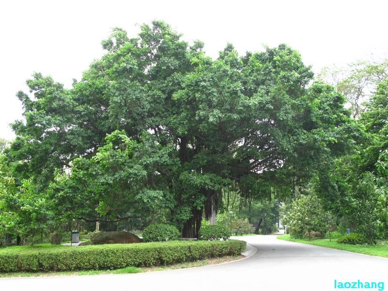 华南植物园---木兰园1
