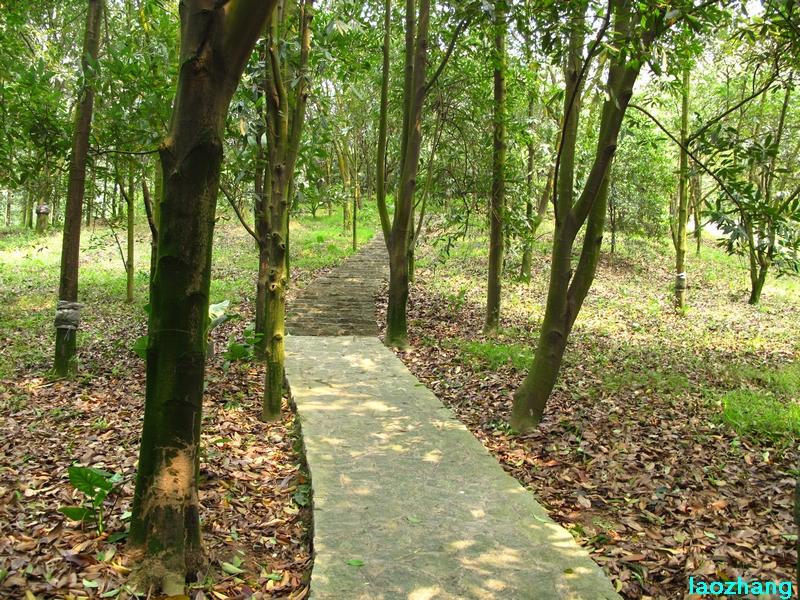 华南植物园---木兰园2