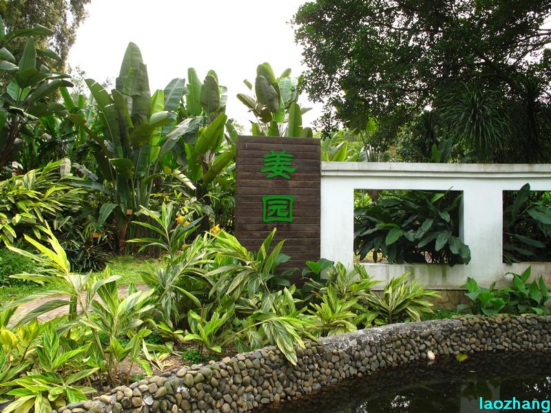 华南植物园---姜园