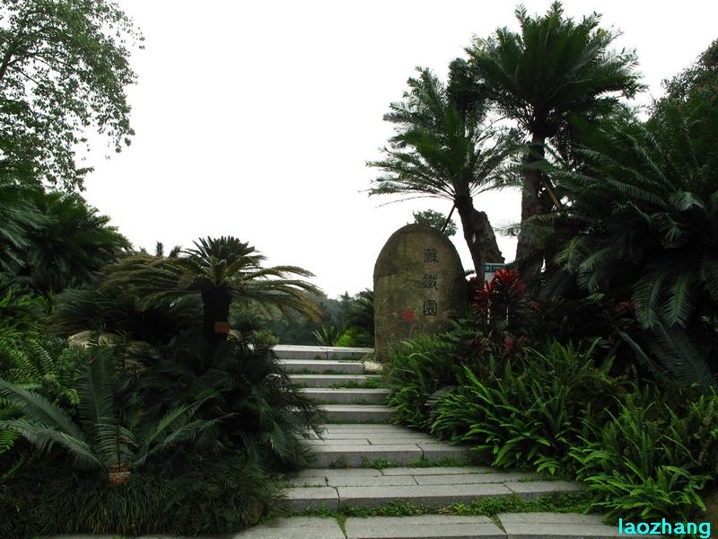 69 【光影中国】 69 新手图集 69 华南植物园---苏铁园  邓州