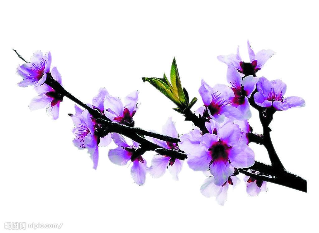 春天柳树桃花燕子