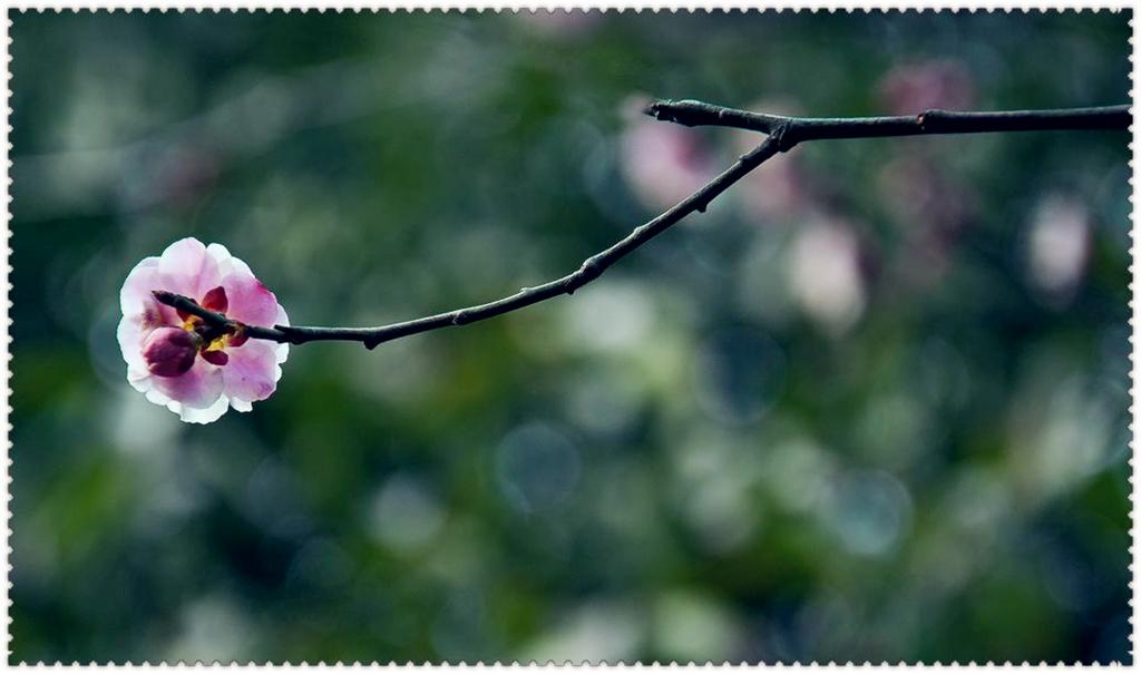 2012梅花第四季 花卉草木 36行社区