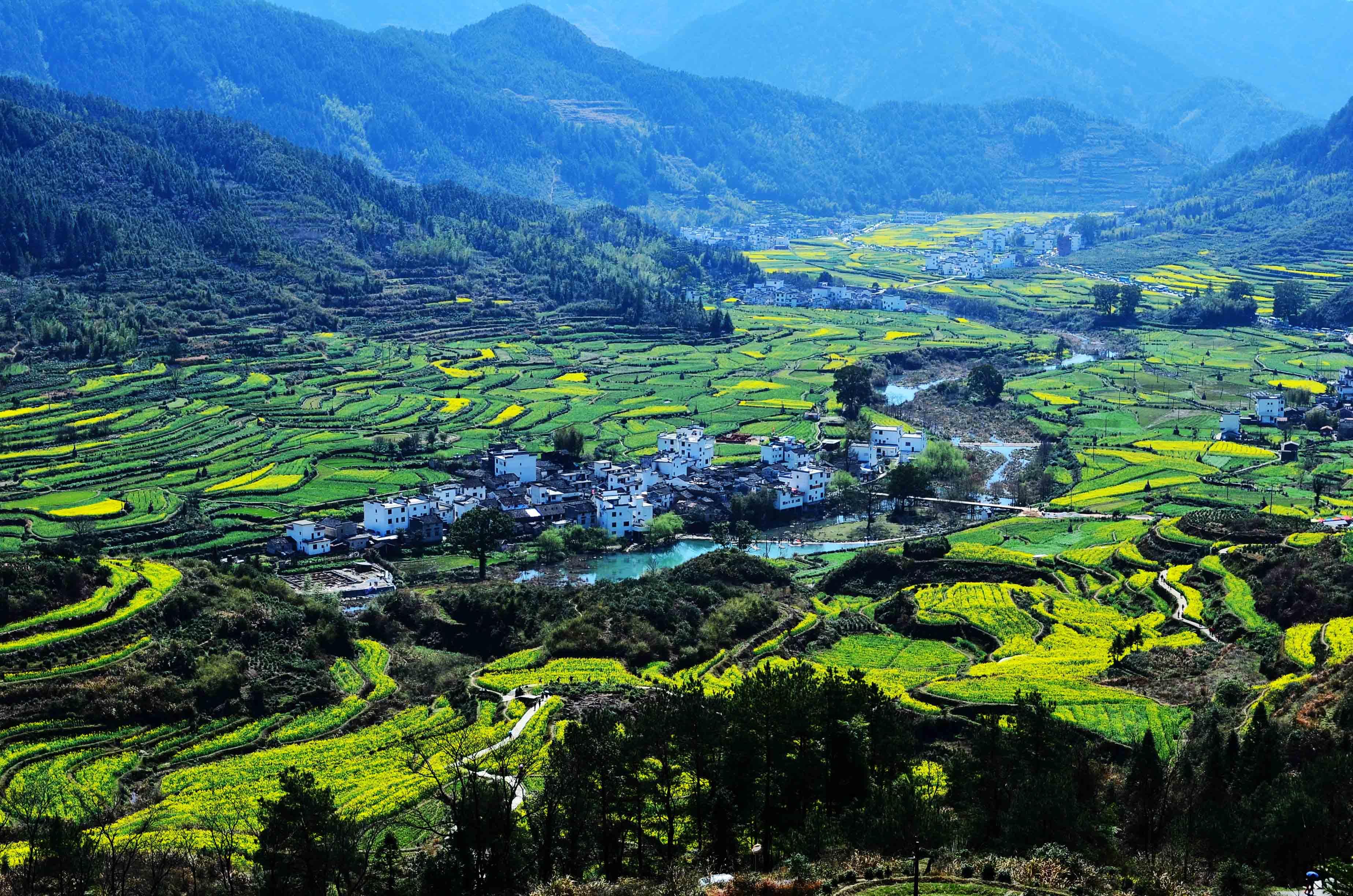 江西省种植结构