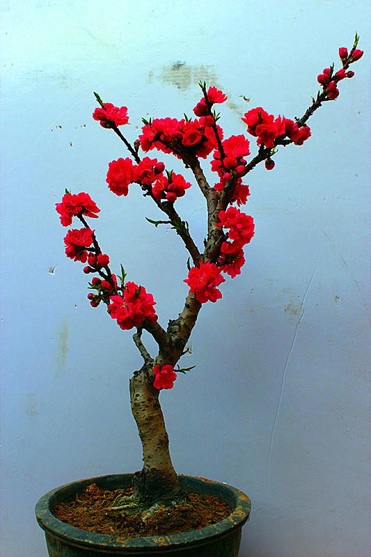 壁纸 花 盆景 盆栽 植物 桌面 533_800 竖版 竖屏 手机