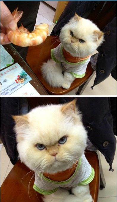 猫咪生气的样子