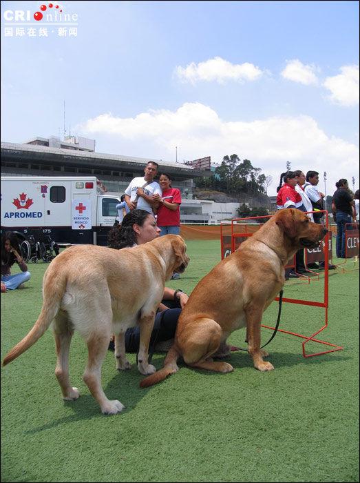 世界上最大的狗狗