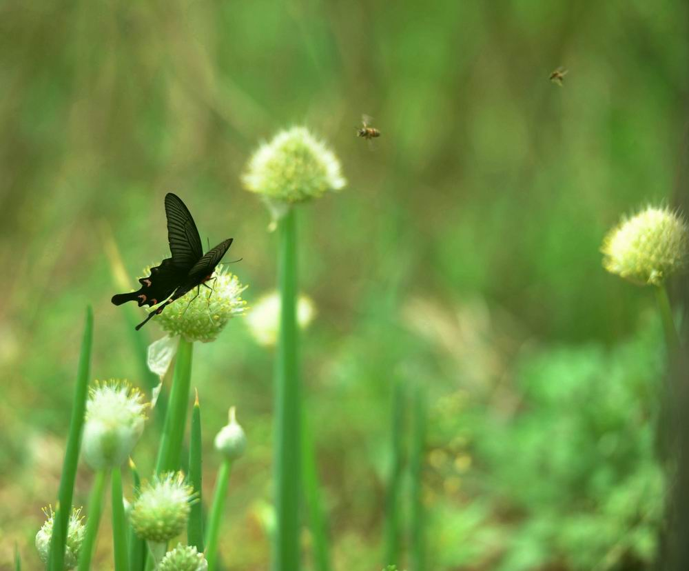 2012年04月《春天的故事》蝶蜂恋