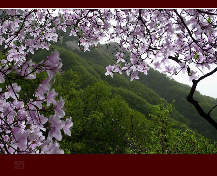 """镇平部北顶五朵山美景在春天里等你""""杜鹃花开红艳艳""""活动拍摄花絮."""