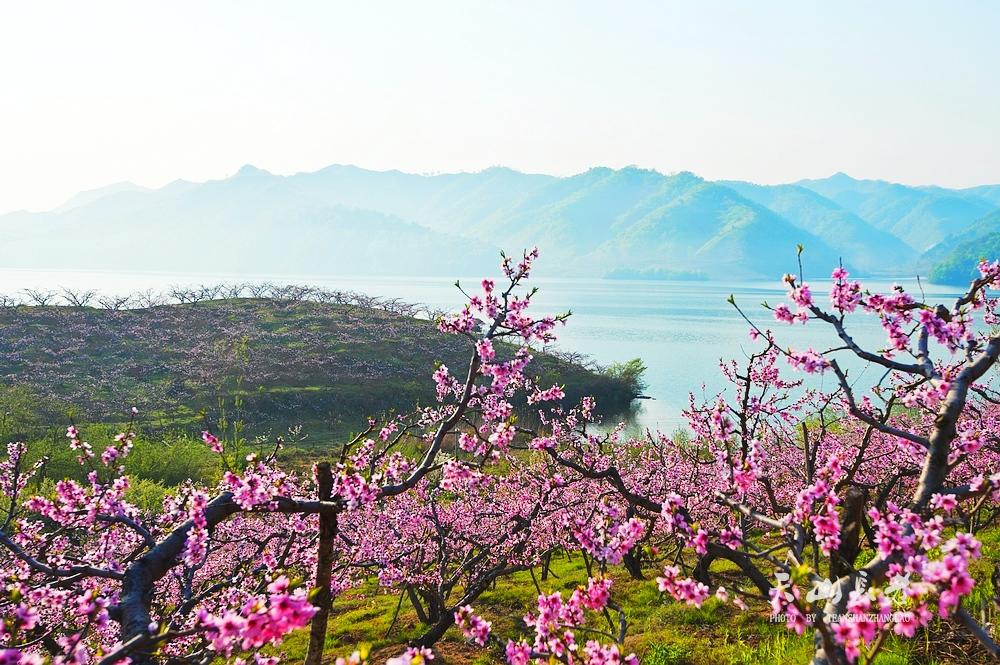 在那桃花盛开的地方-行摄风光-南阳网