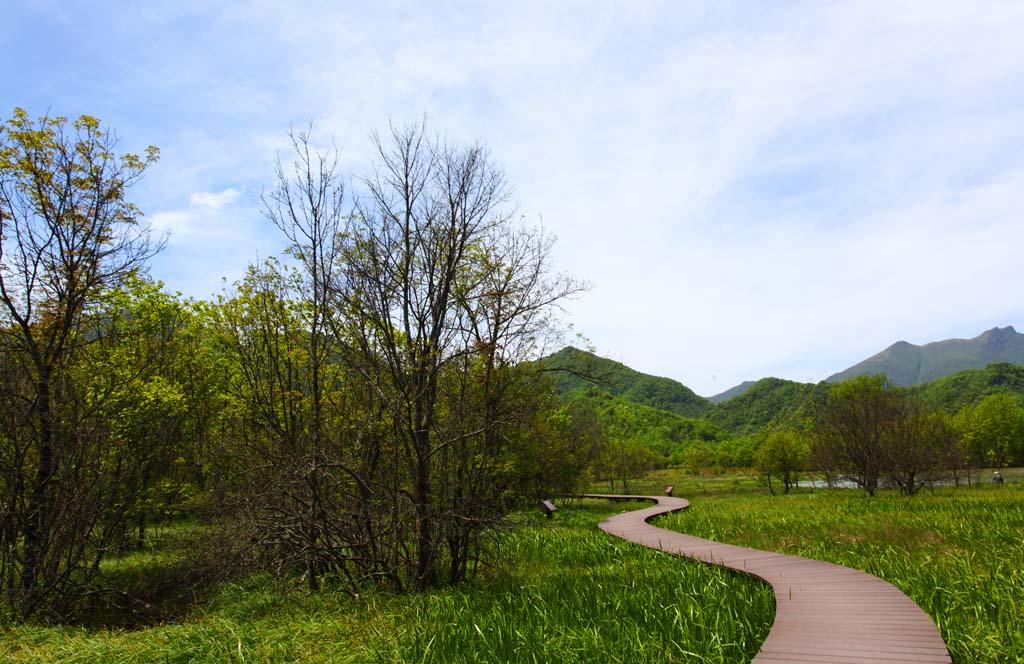 一条弯弯的乡间小路从路边一直延伸到一个竹棚小院图片
