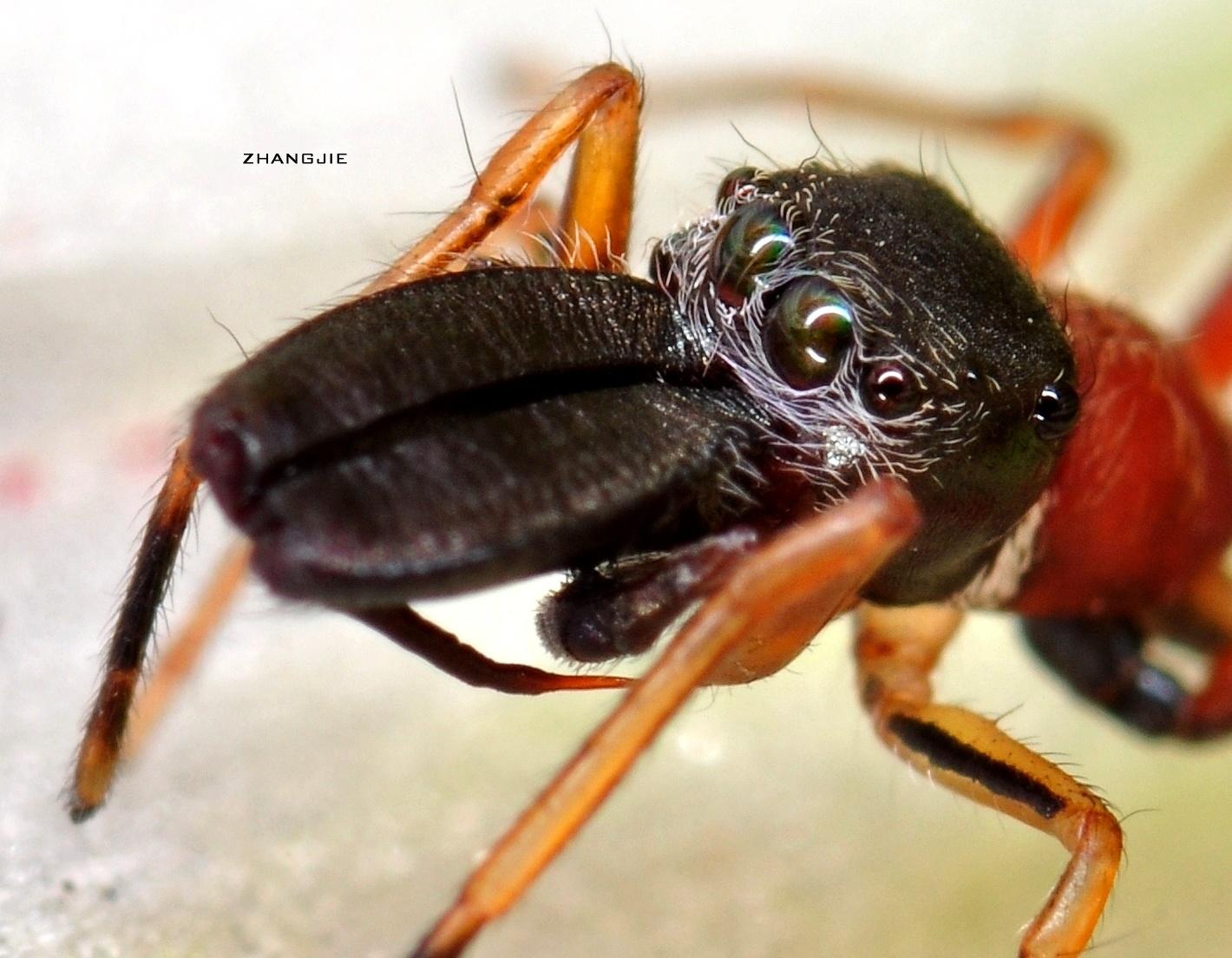 壁纸 动物 龟 昆虫 桌面 1420_1104