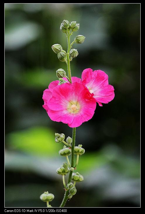花卉一 花卉草木 36行社区 bbs.01ny.cn -花卉一