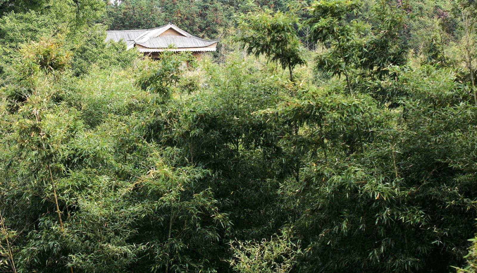 湖北省  枣阳市地标 白竹园寺风景区 - 西部落叶 - 《西部落叶》· 余文博客