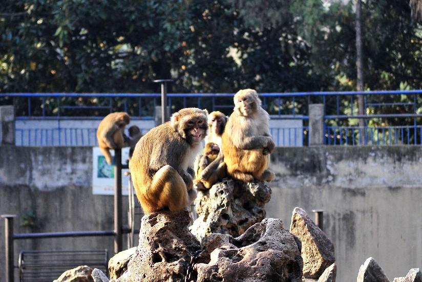 铁笼下的动物--动物园随拍感想