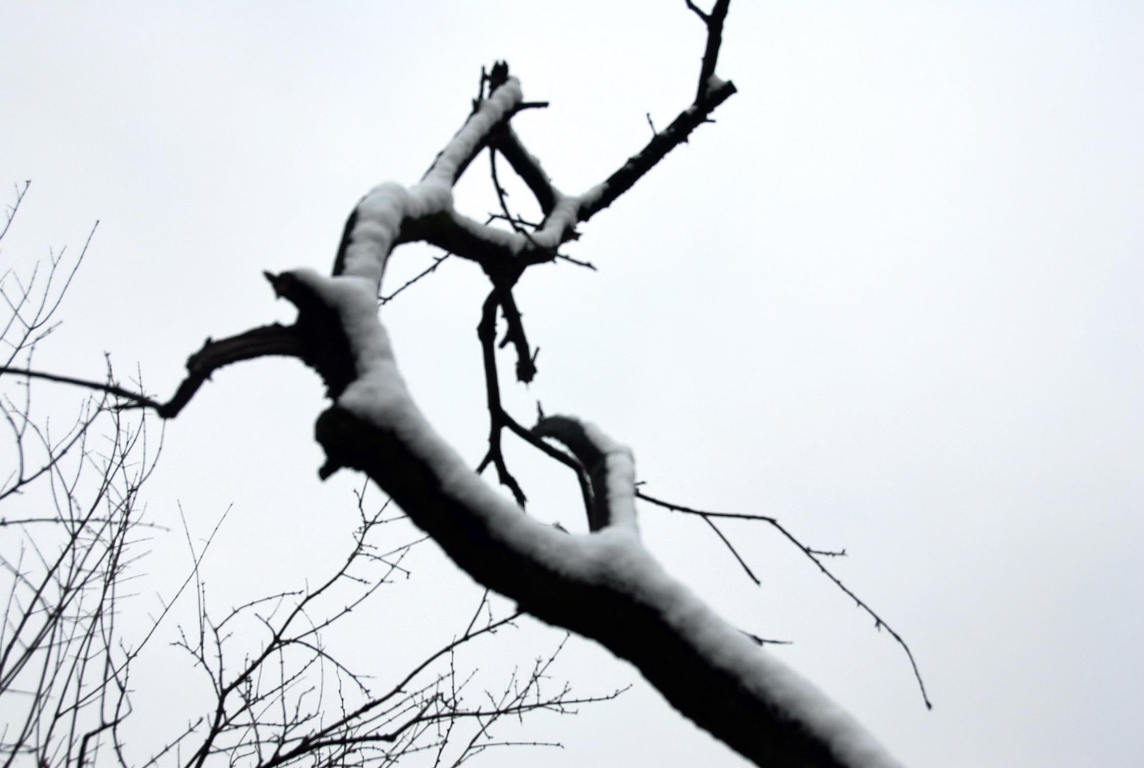 最可爱的人,昨日雪景试镜