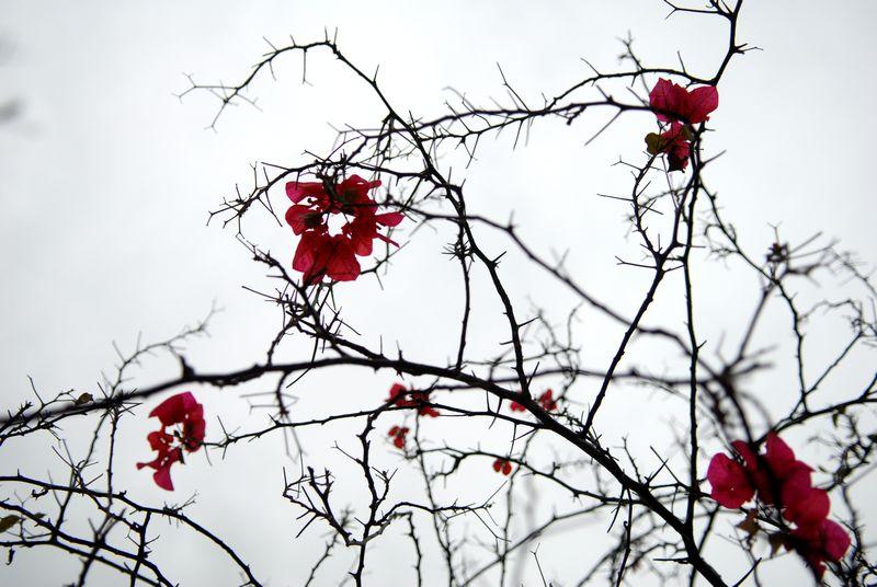 自由行走的花-行摄风光-36行社