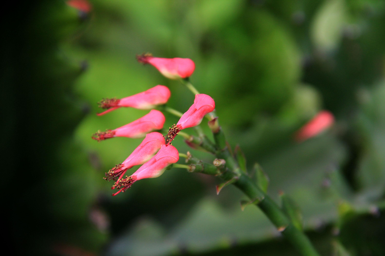 海南热带花卉二