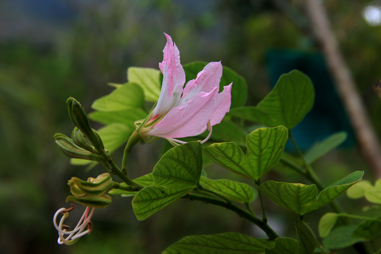 海南热带花卉(三)